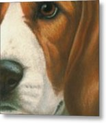 Goggie Beagle Metal Print