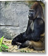Going Ape Metal Print