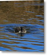 Going Down - A Duck Tale Metal Print