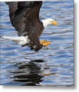 Going For The Kill Metal Print