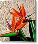 Going In Different Directions Metal Print
