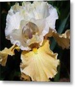 Gold And White Iris Metal Print