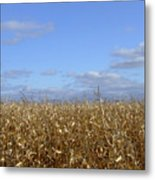 Gold Corn Metal Print
