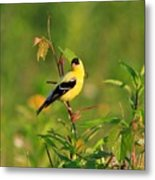Gold Finches-2 Metal Print