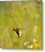 Gold Finches-5 Metal Print