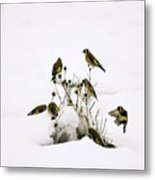 Gold Finches In Snow Metal Print
