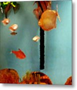 Gold Fish Life Metal Print