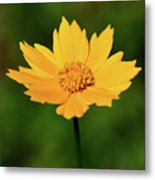 Gold In The Garden Metal Print