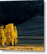 Gold In The Lamar Valley Metal Print