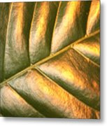 Gold Leaf Canvas Metal Print