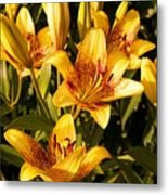 Gold Lilly Metal Print