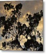 Gold Sunset Tree Silhouette I Metal Print