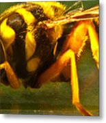 Gold Syrphid Fly Metal Print