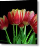 Gold Tip Tulips Metal Print by Tracy Hall