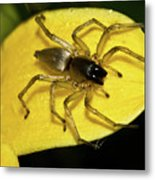 Golden Arachnid  Metal Print