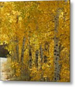 Golden Aspen Metal Print