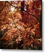 Golden Autumn Sunshine Metal Print