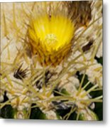 Golden Barrel Blossom Metal Print