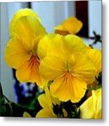 Golden Blooms Beside The Porch Metal Print