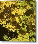 Golden Branches Metal Print