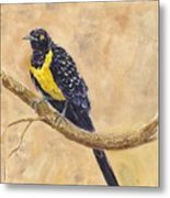 Golden Breasted Starling Metal Print