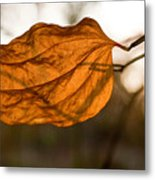Golden Briar Leaf Metal Print