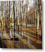 Golden Brown Pond Metal Print