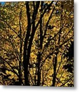 Golden Colors Of Autumn In New England  Metal Print