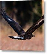 Golden Eagle Flying Metal Print