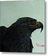 Golden Eagle- Head Study Metal Print