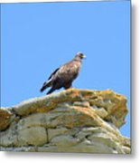 Golden Eagle Lookout Metal Print