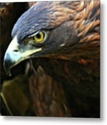 Golden Eye Metal Print