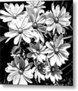 Golden Eyed Susan 2 Metal Print