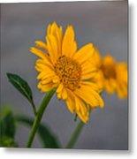 Golden Flower II Metal Print