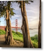The Trees Of The Golden Gate Metal Print