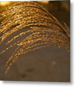 Golden Grass Metal Print