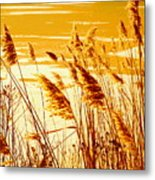 Golden Grasses Metal Print