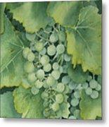 Golden Green Grapes Metal Print