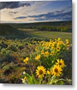Golden Hills Metal Print by Mike  Dawson