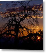 Golden Hour  Metal Print