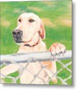 Golden Lab Wally Metal Print