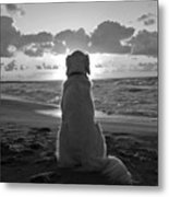 Golden Labrador Watching Sunset Metal Print