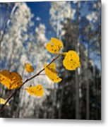 Golden Leaves Against A Muted Forest Metal Print