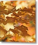 Golden Light Autumn Maple Leaves Metal Print