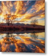 Golden Light On The Pond Metal Print