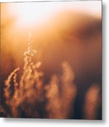 Golden Light Metal Print