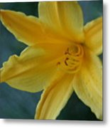 Golden Lily 2 Metal Print