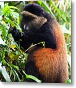 Golden Monkey II Metal Print