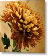 Golden Mum Metal Print