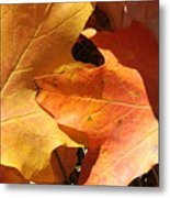 Golden Orange Metal Print